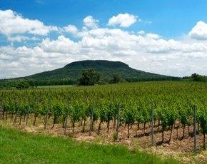 Винодельческие регионы Венгрии